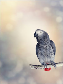African Grey on a branch
