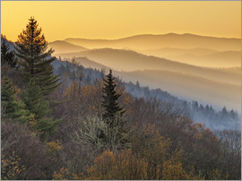 Ann Collins - Great Smoky Mountains National Park