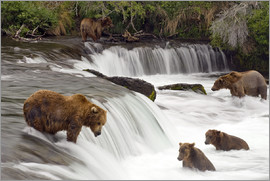 Chris Miller - Grizzly in Katmai National Park