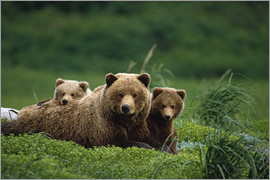 Jo Overholt - Grizzly bear with cubs
