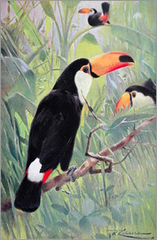 Wilhelm Kuhnert - Great Toucan