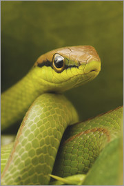 Ktsdesign - Serpiente verde