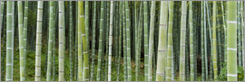 Jan Christopher Becke - Green bamboo forest in Kyoto, Japan