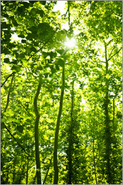 Green forest in sunlight