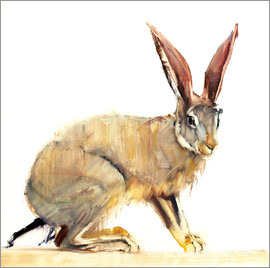 Mark Adlington - Rabbit