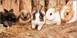 Photoplace Creative - bunnys