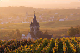 Matteo Colombo - Autumn vineyards near Ville Dommange in Champagne, France