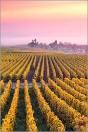 Matteo Colombo - Autumnal vineyards in Champagne