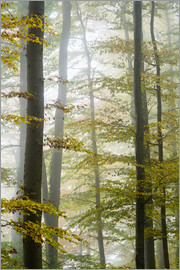 Peter Wey - Foggy forest in autumn foliage