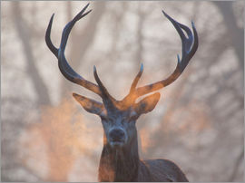Alex Saberi - Stag's breath at sunrise in Richmond park