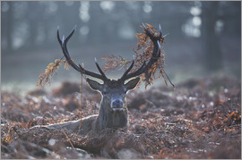 Alex Saberi - Deer stag in the brushwood