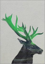 Andreas Lie - Deer In The Aurora Borealis