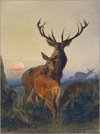 Charles Jones - A Stag with Deer at Sunset
