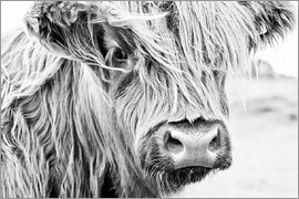 Art Couture - Highland cattle - gentle look