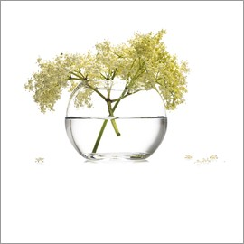 Elderflower in a glass