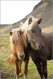 Horses, South Iceland, Northern Europe