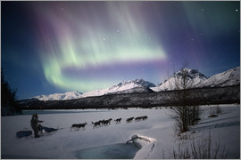 Composite Image - Dogsledding on Matanuska River