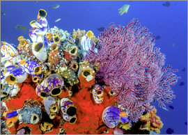 Jones & Shimlock - Indonesia, West Papua, Raja Ampat. Coral reef and fish.