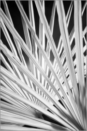 Adam Jones - Infra Red Black & White view of palm tree fronds