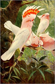 Wilhelm Kuhnert - Leadbeater's Cockatoo