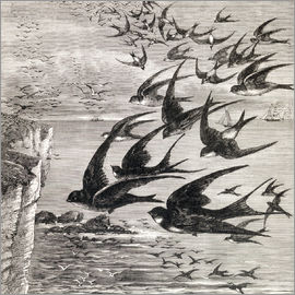 Ken Welsh - Annual Migration Of Swallows