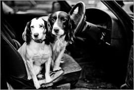 John Alexander - dogs in the car