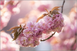 UtArt - Japanese cherryblossom in LOVE 3