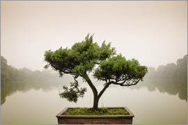 Japanese bonsai in zen garden