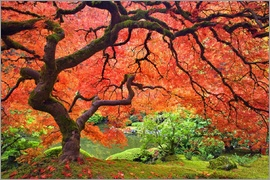 Don Paulson - Japanese maple tree next to pond