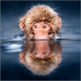 Jan Christopher Becke - Japanese Snow monkey bathing