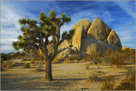 Charles Gurche - Joshua tree and rock