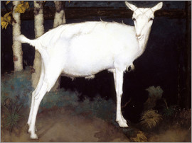 Jan Mankes - Young white goat