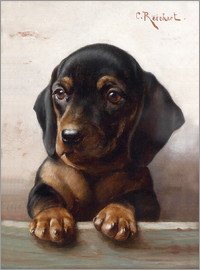 Carl Reichert - Young dachshund