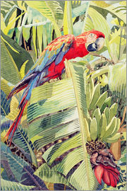 Felicity House - Jungle Parrot