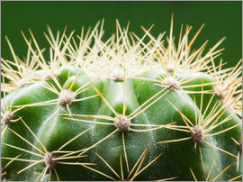 Cactus with thorns