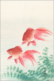Ohara Koson - Carp in the river