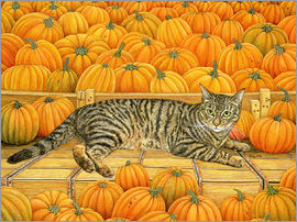 Ditz - Cat in Pumpkin