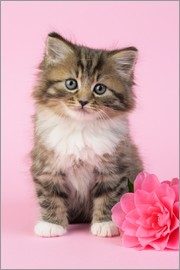 Greg Cuddiford - Kitten with flower