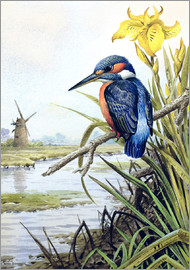 Carl Donner - Kingfisher with Flag Iris and Windmill