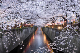 Jan Christopher Becke - Cherry blossoms in spring in Nakameguro, Tokyo, Japan