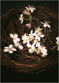 Sybille Sterk - Cherry Blossoms in Nest