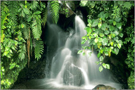 Kevin Schafer - Small waterfall in the rainforest