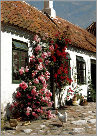 Peder Mork Mönsted - Climbing roses on the farm