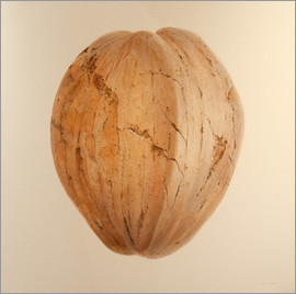 Lincoln Seligman - Coconut from Sri Lanka