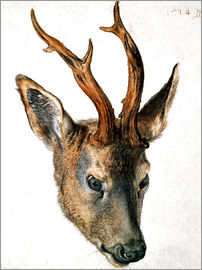 Albrecht Dürer - Head of a Roe Deer