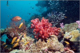 Georgette Douwma - Coral reef in Thailand