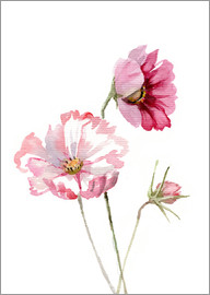 Verbrugge Watercolor - Cosmos flower