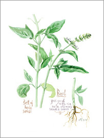 Verbrugge Watercolor - Herbs & Spices collection: Basil