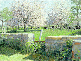 Lucy Willis - Cows in the Orchard