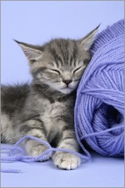 Greg Cuddiford - Grey kitten sleeping on wool